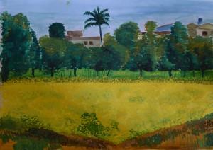 Mustard field, Dhangadhi