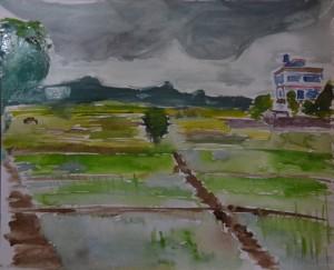 Paddy planted, Dhangadhi